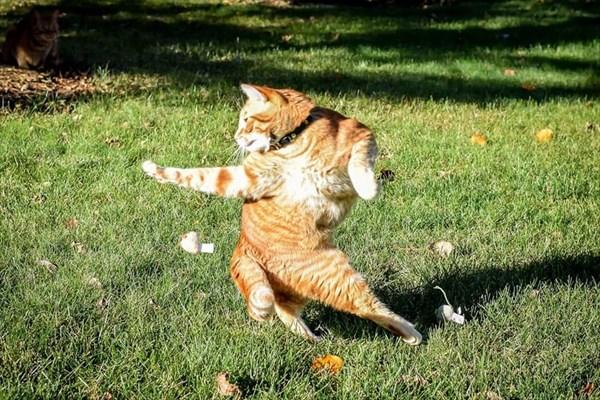 カンフーポーズを決める猫 コラ画像1