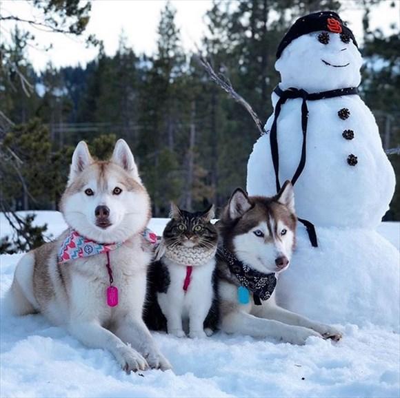 ハスキー犬に育てられた子猫16