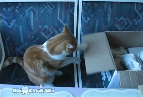 猫パンチのトレーニングに励むネコ