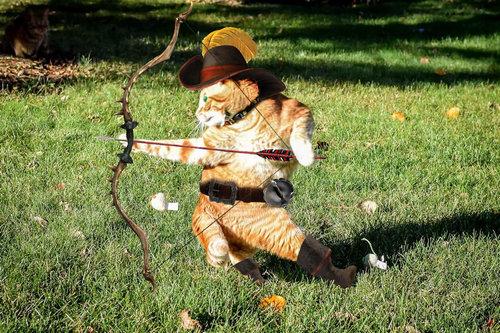 カンフーポーズを決める猫 コラ画像13
