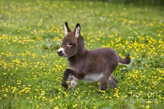 ロバの赤ちゃん 写真1
