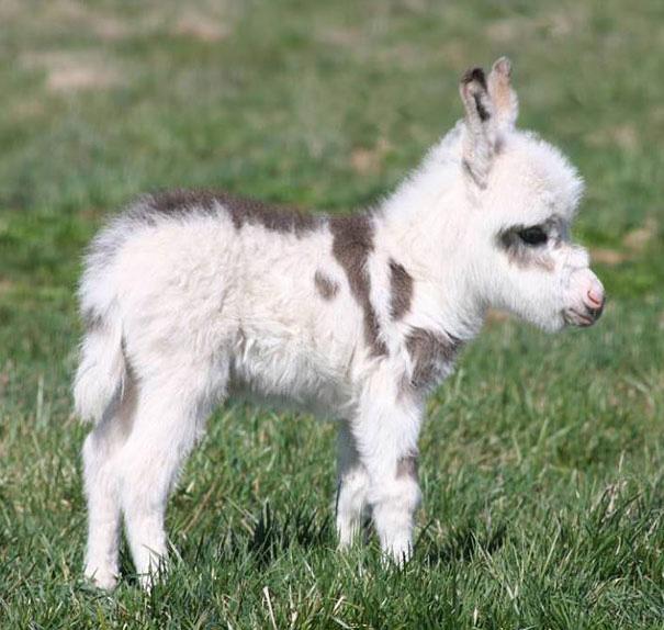 ロバの赤ちゃん 写真12