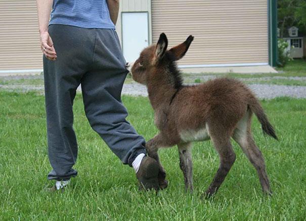 ロバの赤ちゃん 写真16