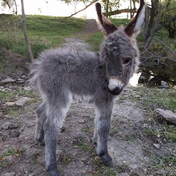 ロバの赤ちゃん 写真9