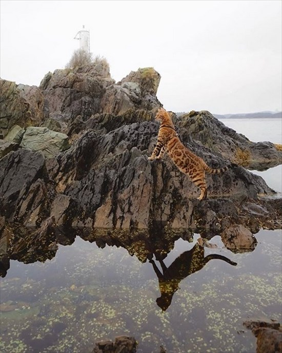 ベンガル猫のSuki写真 インスタで大人気14