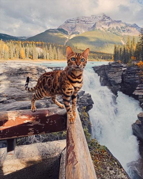 ベンガル猫のSuki写真 インスタで大人気2
