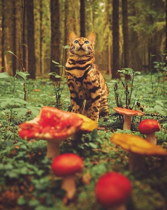 ベンガル猫のSuki写真 インスタで大人気8