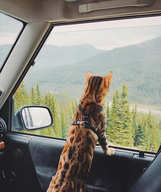 ベンガル猫のSuki写真 インスタで大人気10