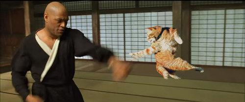 カンフーポーズを決める猫 コラ画像8