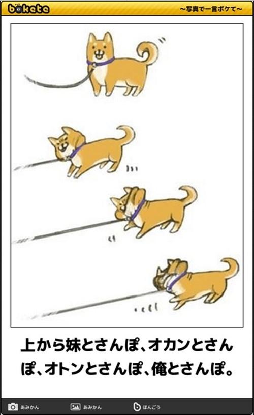 犬の写真で一言ボケて!19