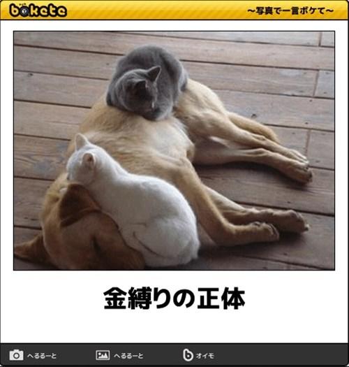 犬の写真で一言ボケて!12