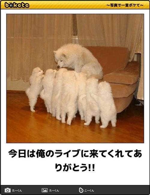 犬の写真で一言ボケて!8