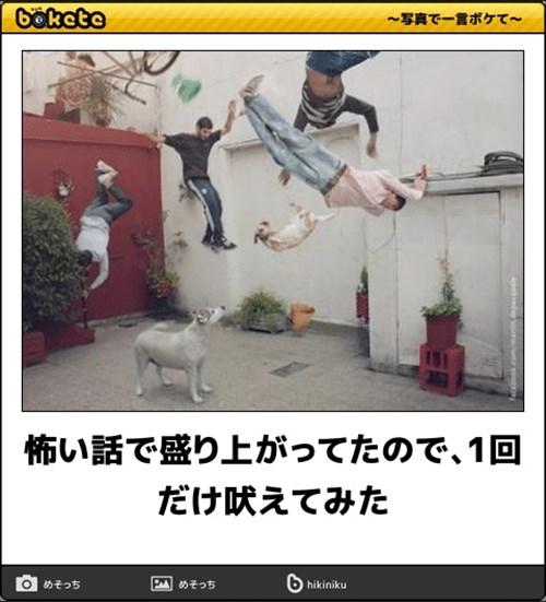 犬の写真で一言ボケて!13