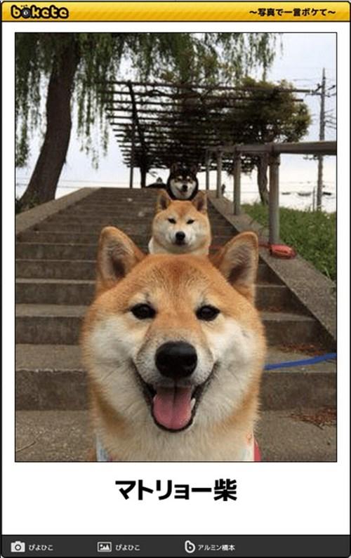 犬の写真で一言ボケて!15
