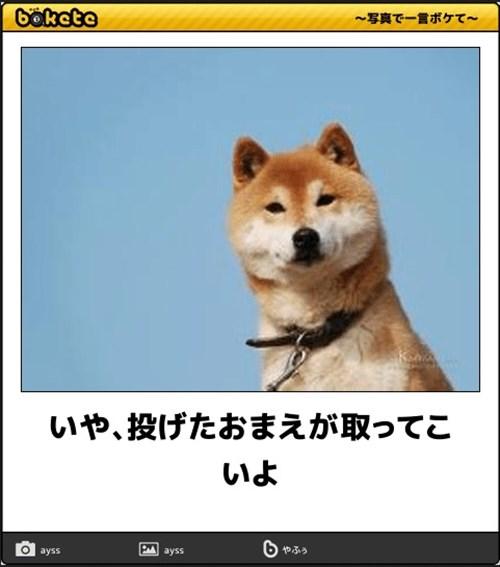 犬の写真で一言ボケて!18