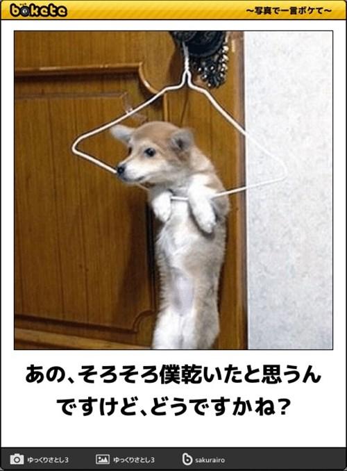 犬の写真で一言ボケて!17