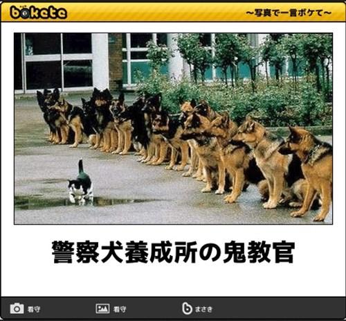 犬の写真で一言ボケて!9