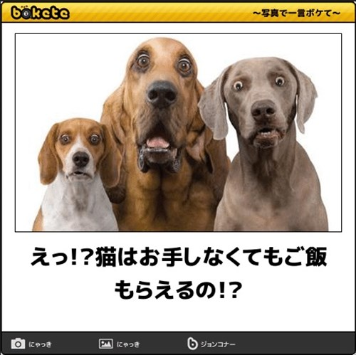 犬の写真で一言ボケて!4
