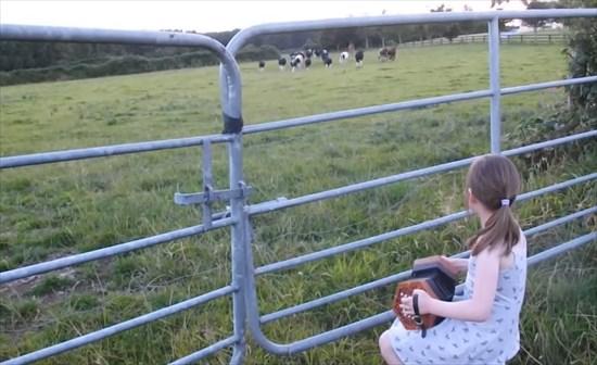 少女の奏でる音に牛たちが集まってきた3