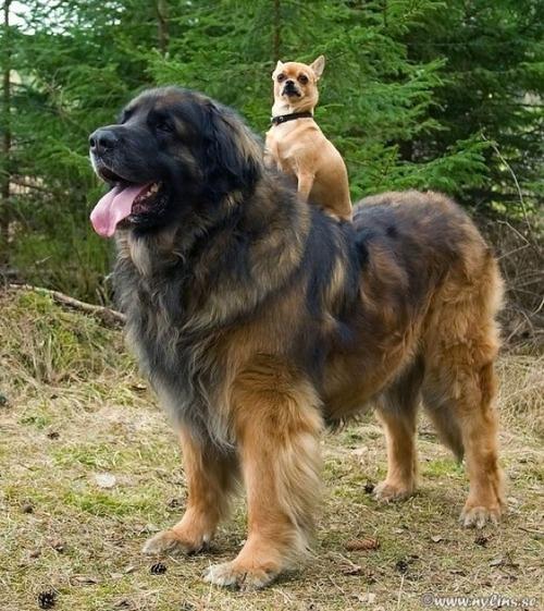 アニマルタクシー!動物を乗りこなす動物たち2