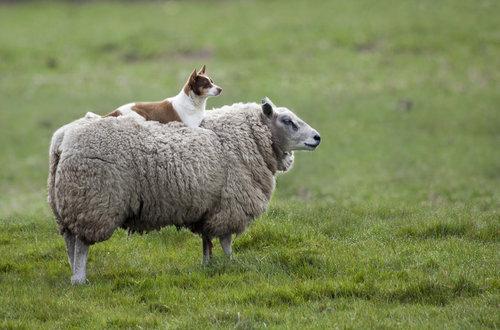 アニマルタクシー!動物を乗りこなす動物たち21