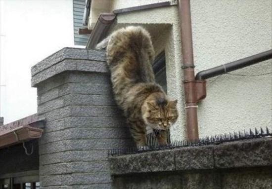 トゲトゲシートの上を歩いて行く猫 1