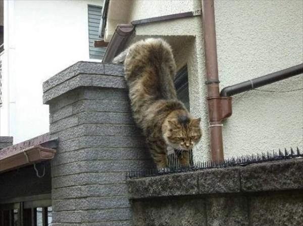 トゲトゲシートの上を歩いて行く猫 2