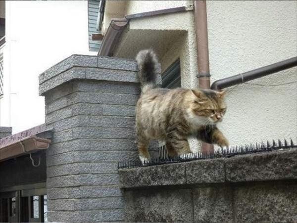 トゲトゲシートの上を歩いて行く猫 3
