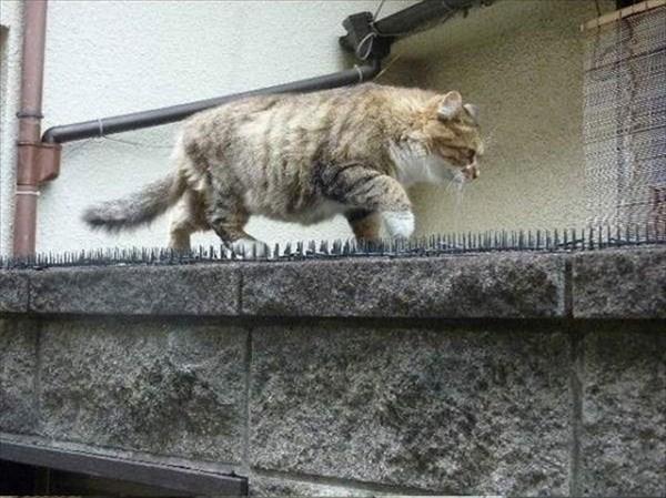 トゲトゲシートの上を歩いて行く猫 4