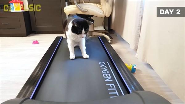 ルームランナーに初挑戦する猫 4