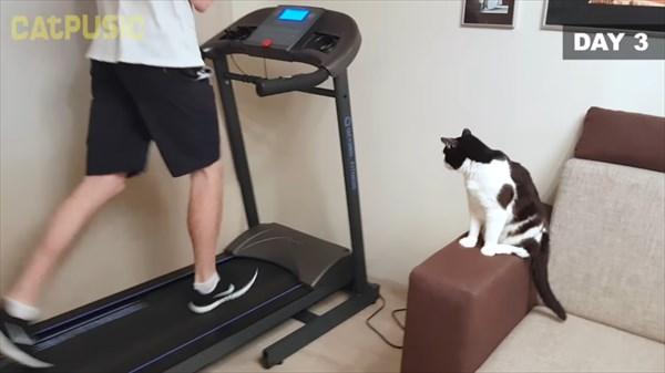 ルームランナーに初挑戦する猫 6