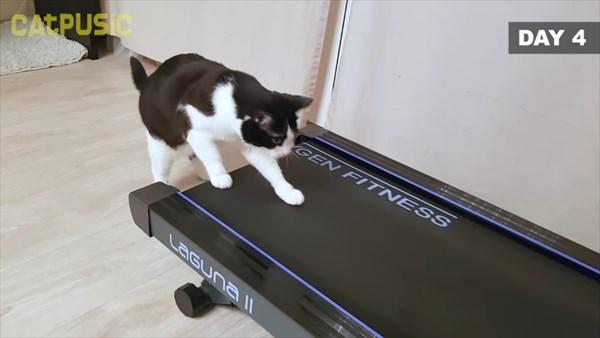 ルームランナーに初挑戦する猫 8