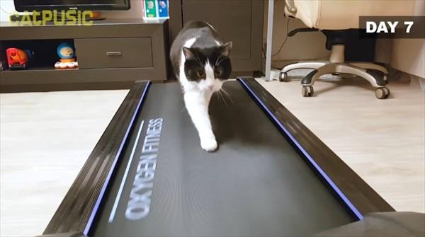 ルームランナーに初挑戦する猫 14