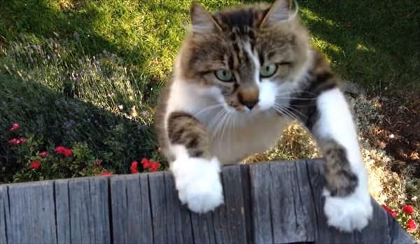 呼んだら来る猫10