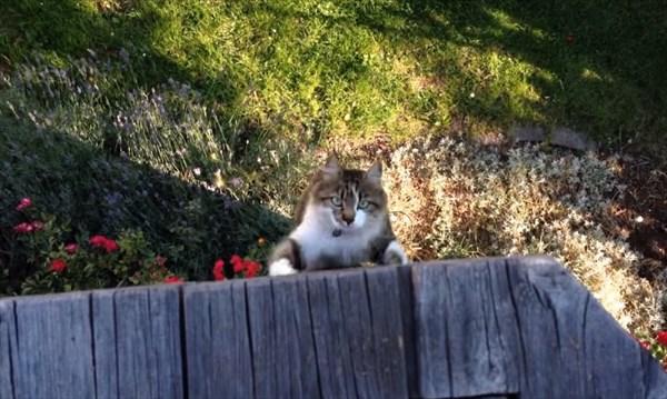 呼んだら来る猫7