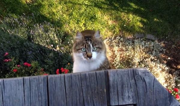 呼んだら来る猫8