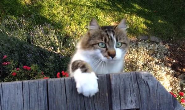 呼んだら来る猫9