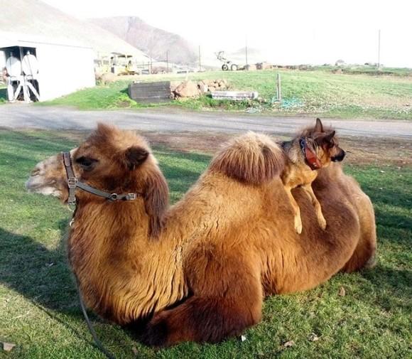 アニマルタクシー!動物を乗りこなす動物たち6