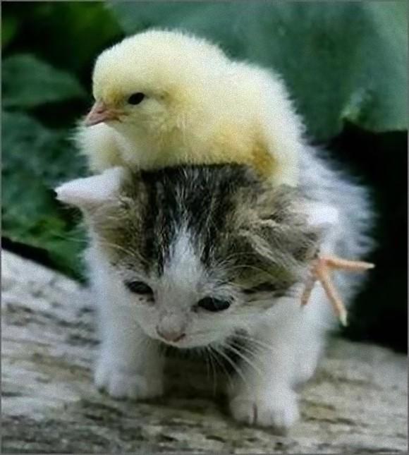 アニマルタクシー!動物を乗りこなす動物たち13