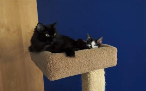 いつも一緒に寝る2匹の猫 写真1