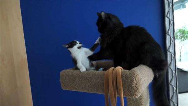 いつも一緒に寝る2匹の猫 写真3