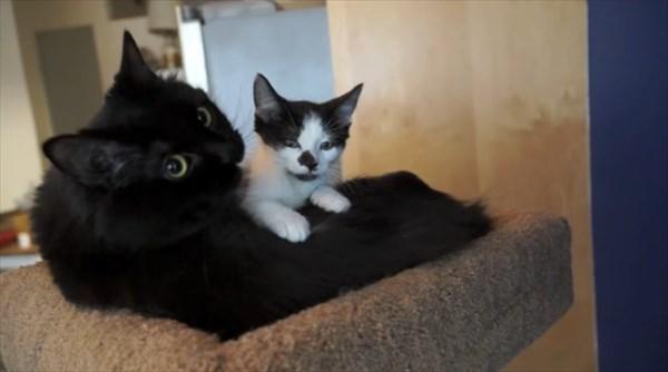 いつも一緒に寝る2匹の猫 写真4