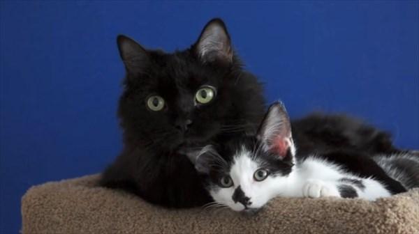 いつも一緒に寝る2匹の猫 写真6