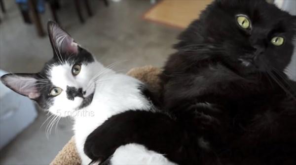 いつも一緒に寝る2匹の猫 写真9