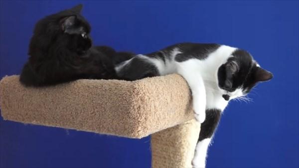 いつも一緒に寝る2匹の猫 写真14