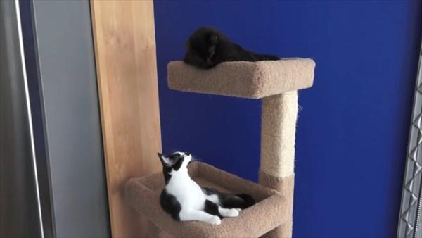 いつも一緒に寝る2匹の猫 写真15
