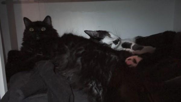 いつも一緒に寝る2匹の猫 写真17