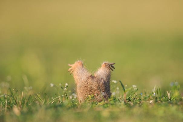 動物たちのドジっ子シーンで癒やされよう 画像9
