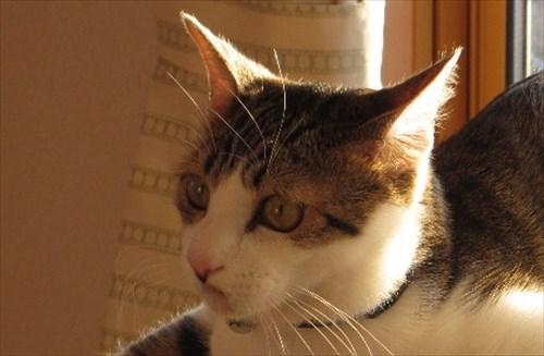 変わった座り方をしている かわいい猫1