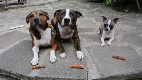 おあずけ状態の3匹の犬。よし!の合図で驚きの展開に3